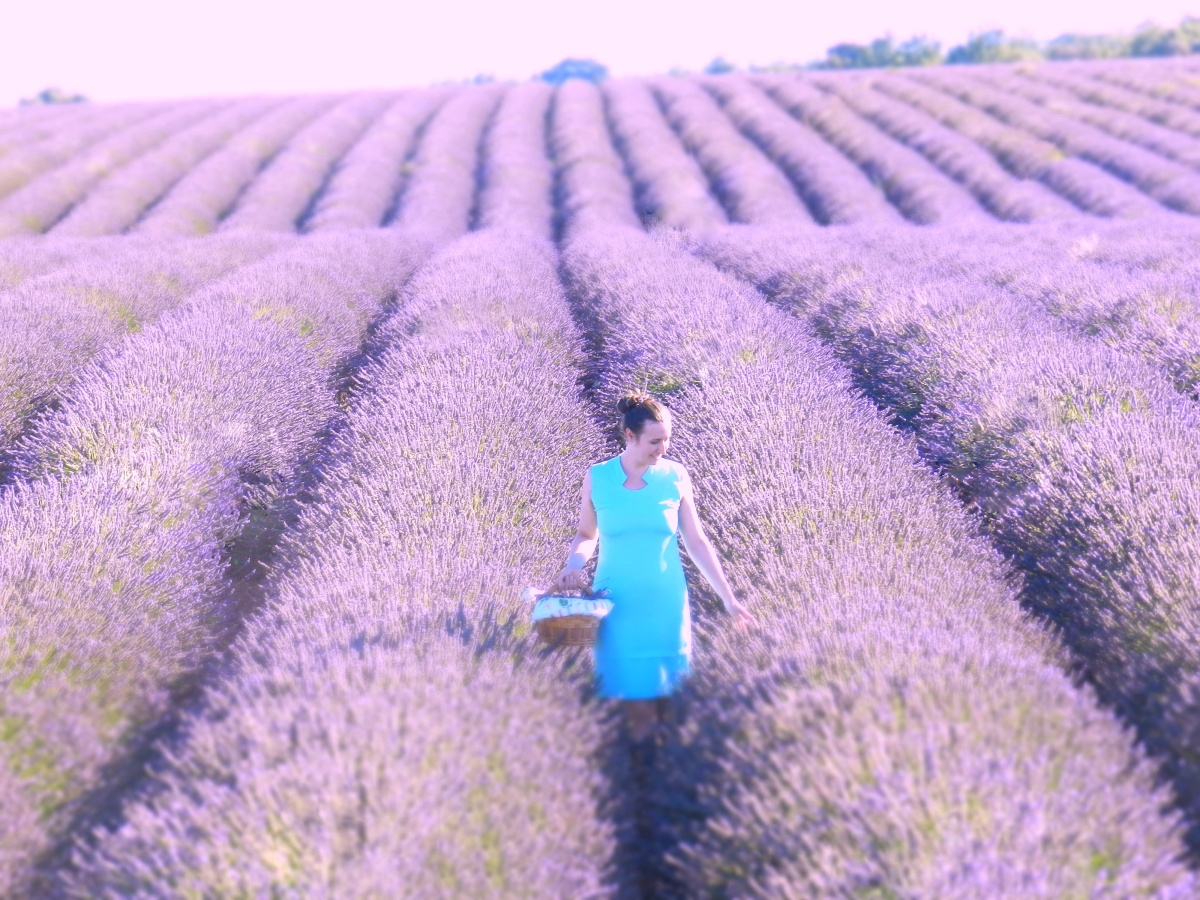 Fransa'nın Provans (Provence) bölgesinde en güzel lavanta tarlalarını bulma rehberi!